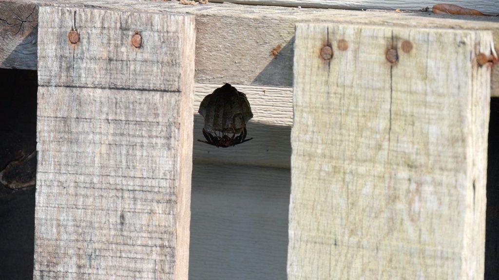 Mini Split Wasp Nest