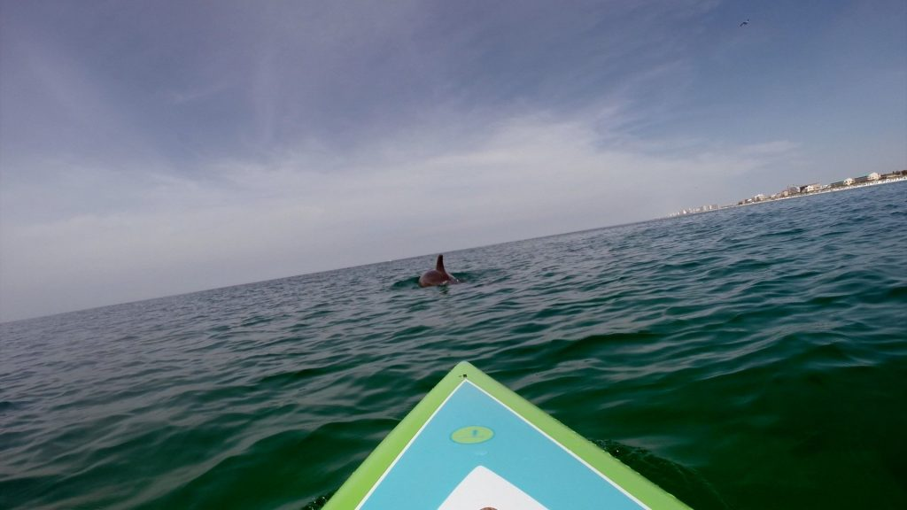 Paddle Boarding in Destin Florida -Dolphins