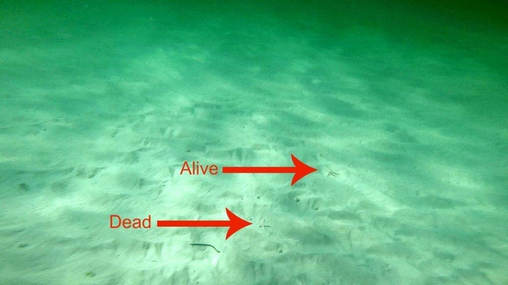 Snorkeling in Destin Florida - starfish dead arrows