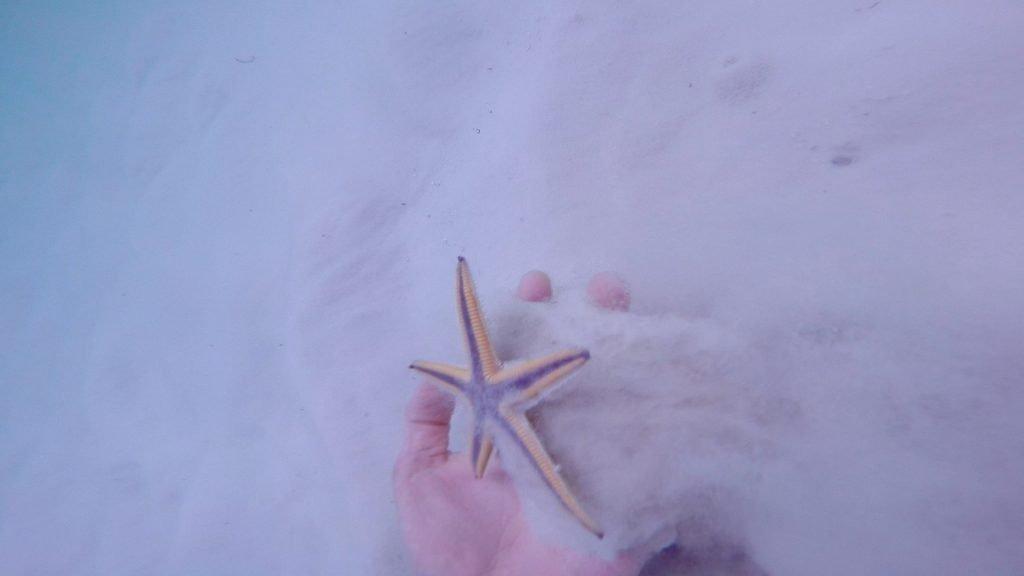 how to find starfish - starfish hand