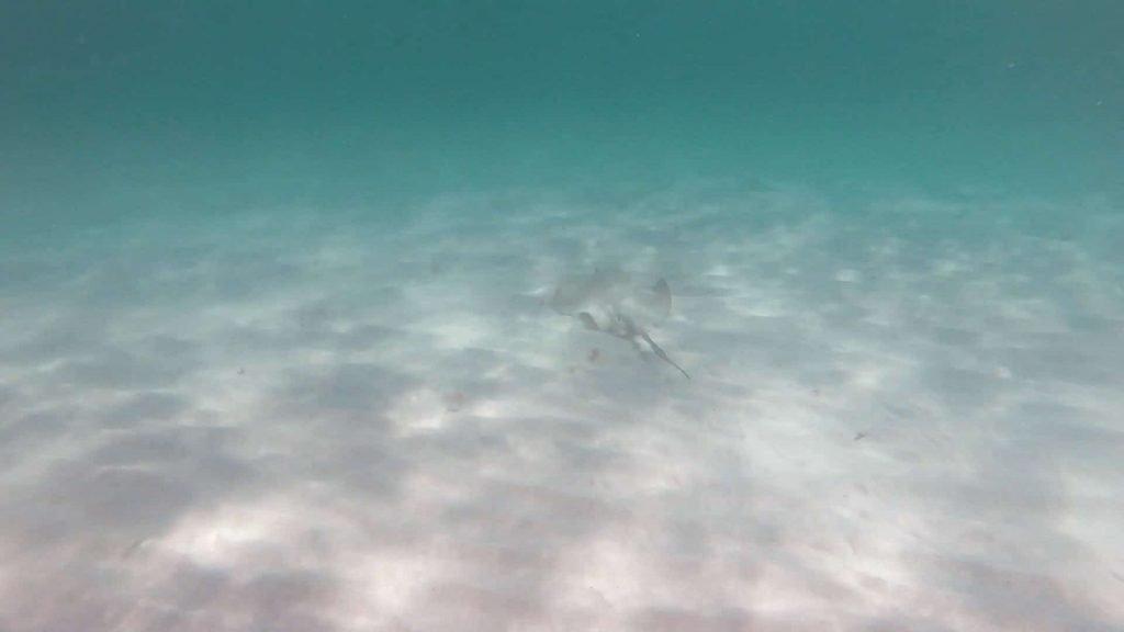 Stingray at the Beach